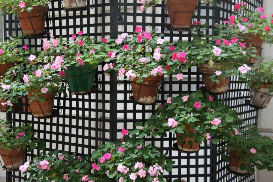 Galer a de im genes decoraci n con muros vegetales for Muro de separacion terraza