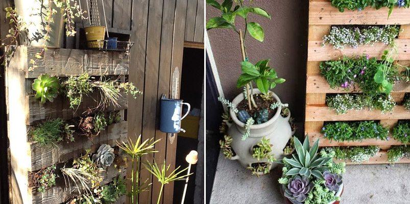 muro vegetal con palets de madera im genes y fotos