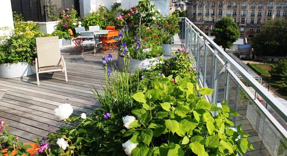 Plantas para terrazas - Plantas para terrazas con mucho sol ...